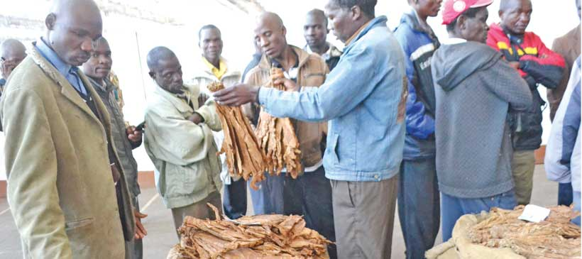 Fears over tobacco output