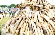 China set to ban ivory trade in 2017