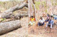 Taking stock of tree planting