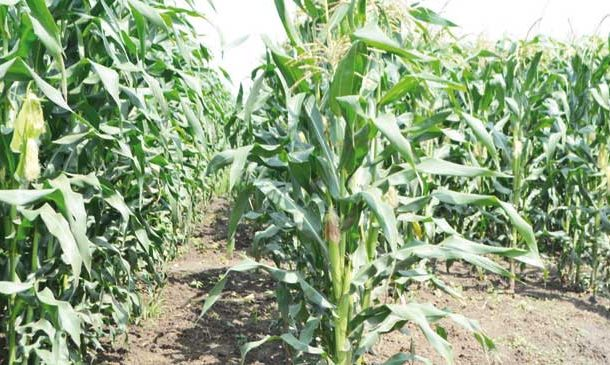 Donors optimistic on agriculture reforms