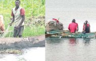 The rush for Malawi fish