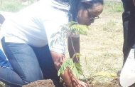 Malawi Housing Corporation goes green