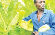 Tobacco growers upbeat on prices
