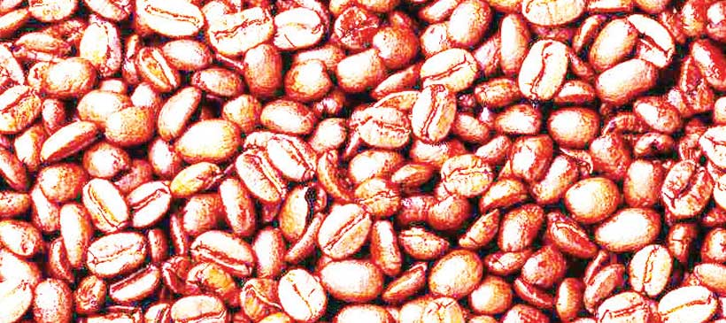 Blame game over cocoa crisis