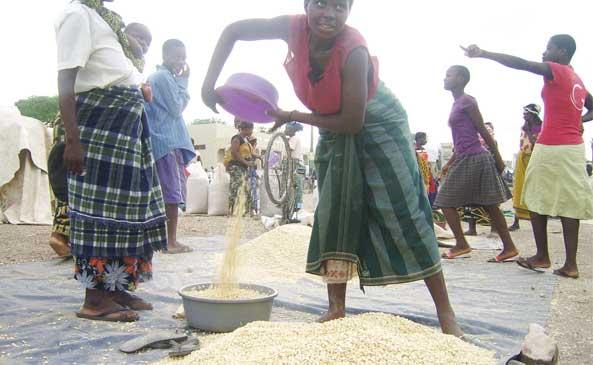 K5 billion for Admarc maize purchase