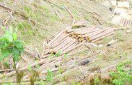 Malawi Defense Force, wood harvesters tussle in Chikangawa