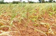Dry spell affects 850, 000 households