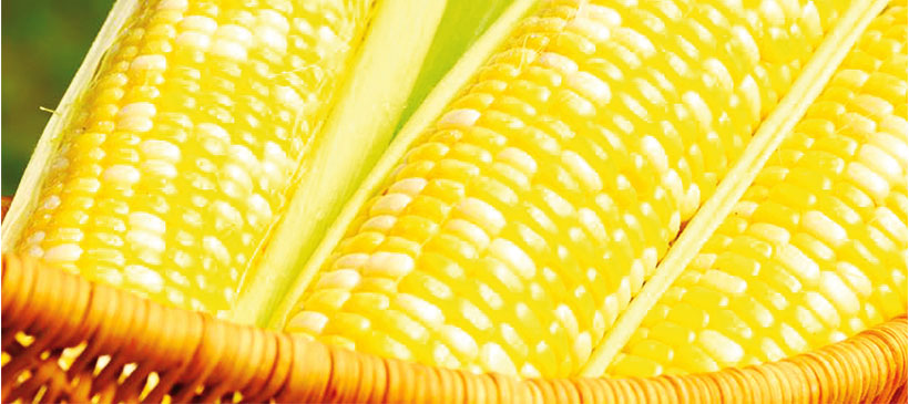 Cfsc says maize price to escalate the times group cfsc says maize price to escalate voltagebd Image collections