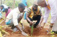 Mzuzu Lions Club plants trees
