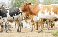 Stakeholders want beef industry revived