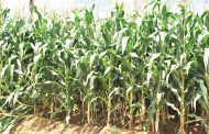 Key but shunned: irony of agriculture