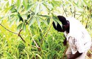 Better ways for rural households