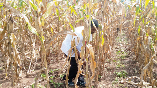 Enhanced productivity project excites farmers