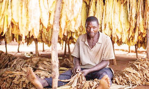 Tobacco buyer upbeat on 2019 market stability