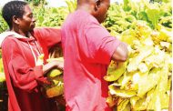 High hopes from tobacco farmers
