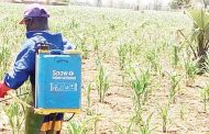NGOs in combat against fall armyworms