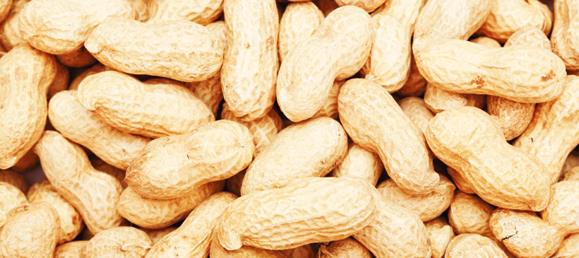 Groundnuts vital for Malawi-expert