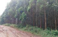 Premium Tama invests K549.7 million in afforestation
