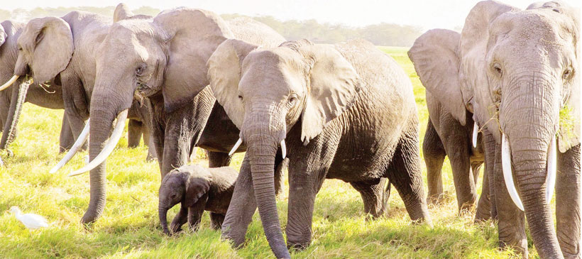 15 arrested for being found with ivory