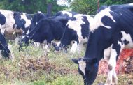 Government tightens screws on foot and mouth disease