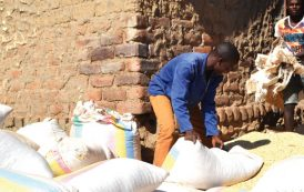 Maize prices up by 25% in November