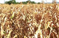 Malawi to lose K100 billion in post-harvest losses