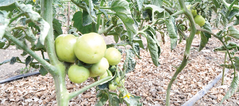 Embracing technology to boost horticulture